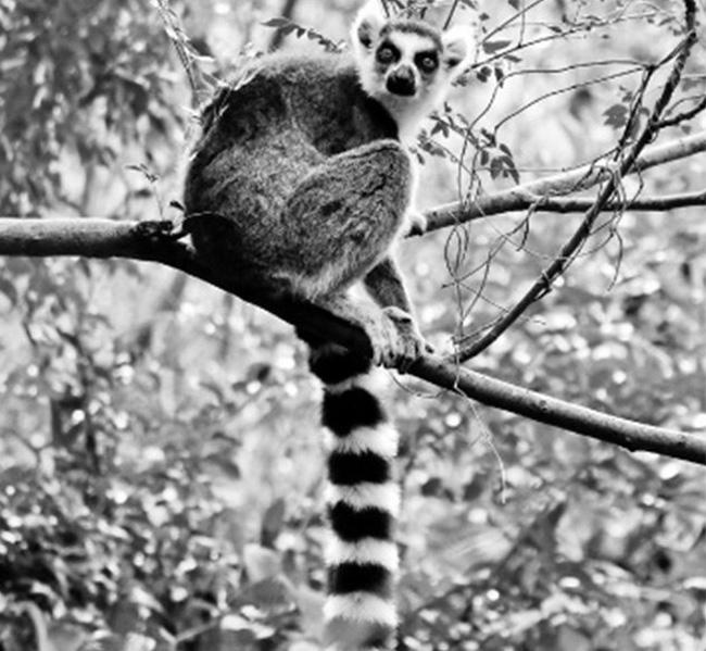 Isalo Akomba Madagascar
