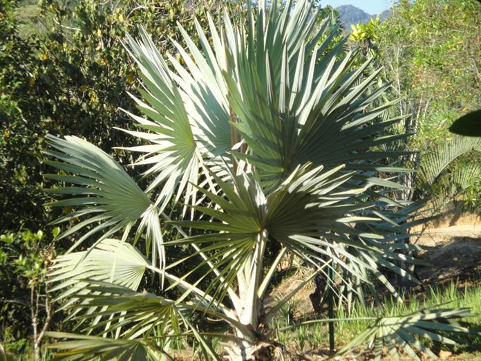 Ranomafana - Akomba Madagascar
